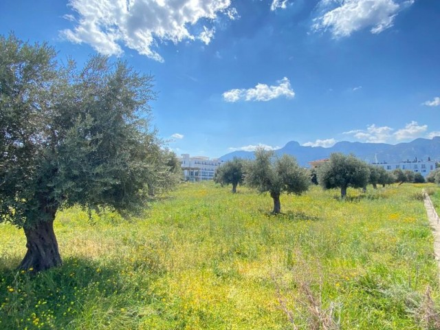 Plot of land for sale in Kyrenia, Catalkoy
